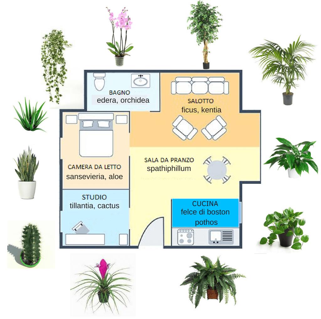 Piante Da Arredo Appartamento piante per la camera da letto e per tutta la casa: guida